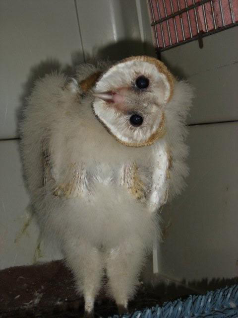 1000+ images about Owls on Pinterest | Baby owls, Owl and ...
